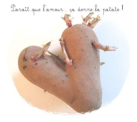 La patate de Saint Valentin
