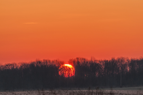 Sunrise through the barren trees.