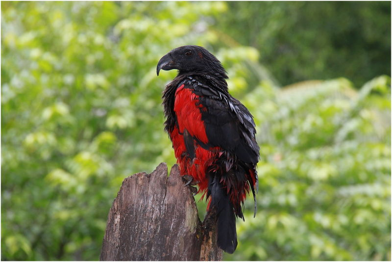 wonder what''s the name of this bird...?
