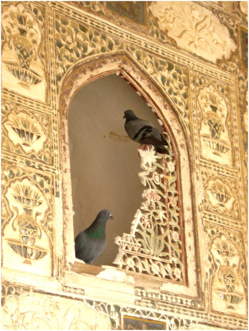 ***Love Birds....***