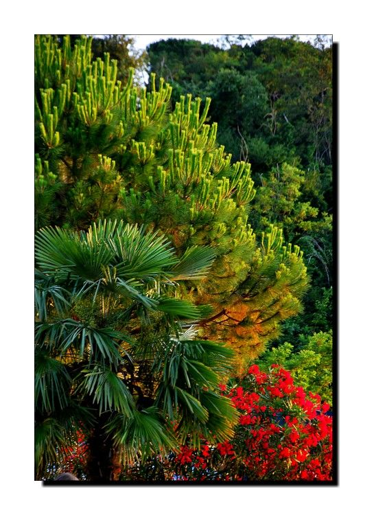 Jardin d'Eden...