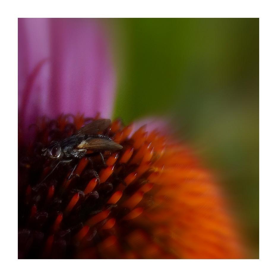 Fly..........