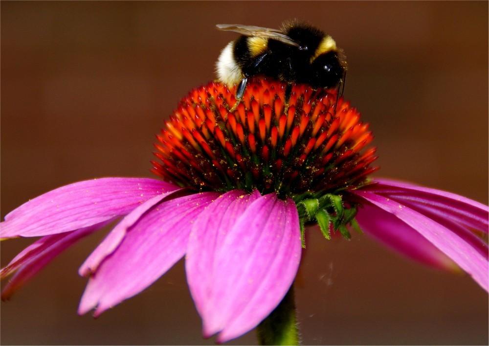 Miss pollen...