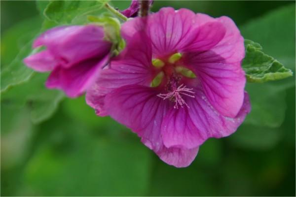 au jardin...(3)