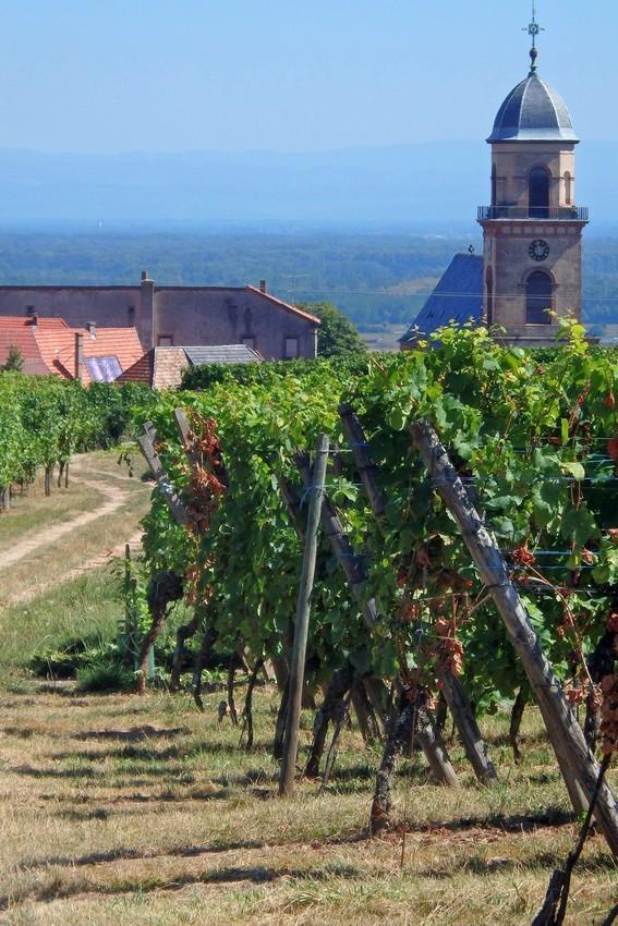 Les vignes de Saint-Hyppolite...