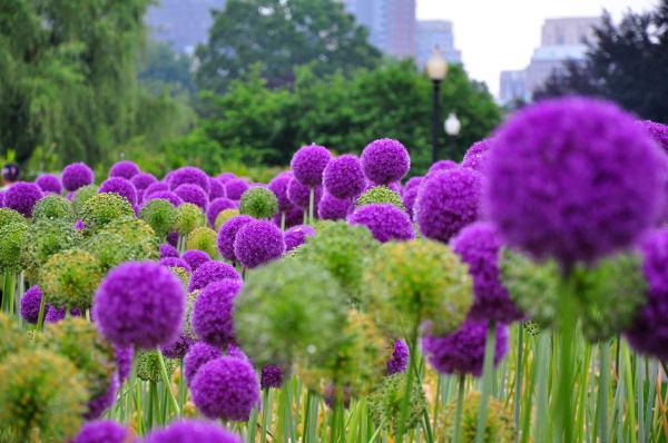 Boston Gardens
