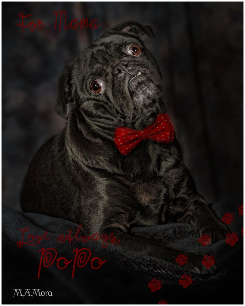 Love Pug