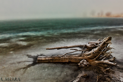 Foggy Lake Log II