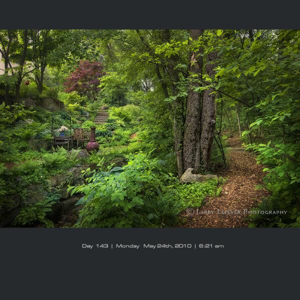 Woodland garden in rain.