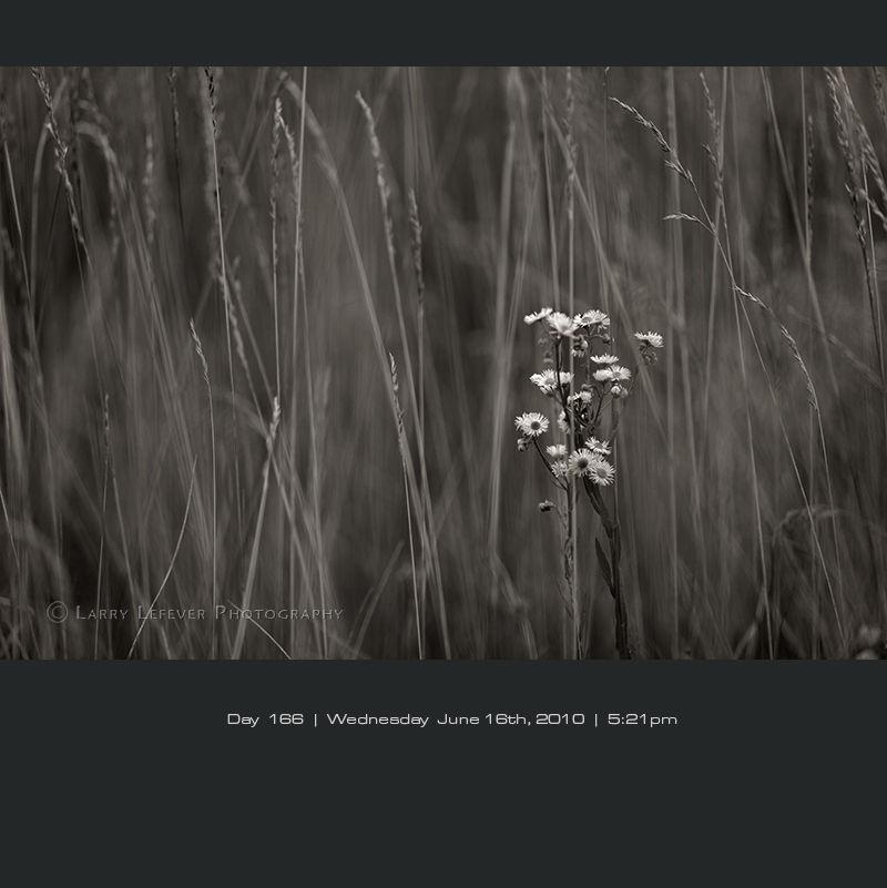 Flower in field of wind blown grass