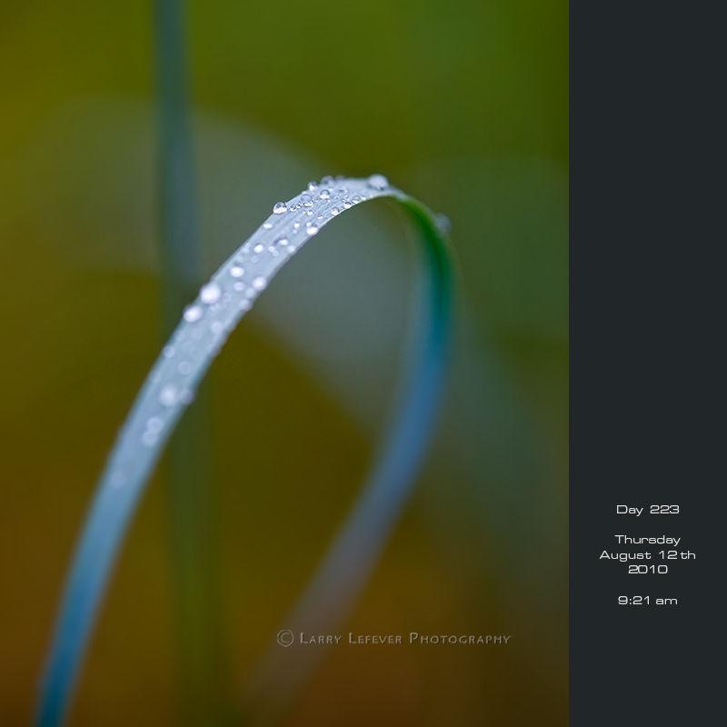 Rain on blade of grass