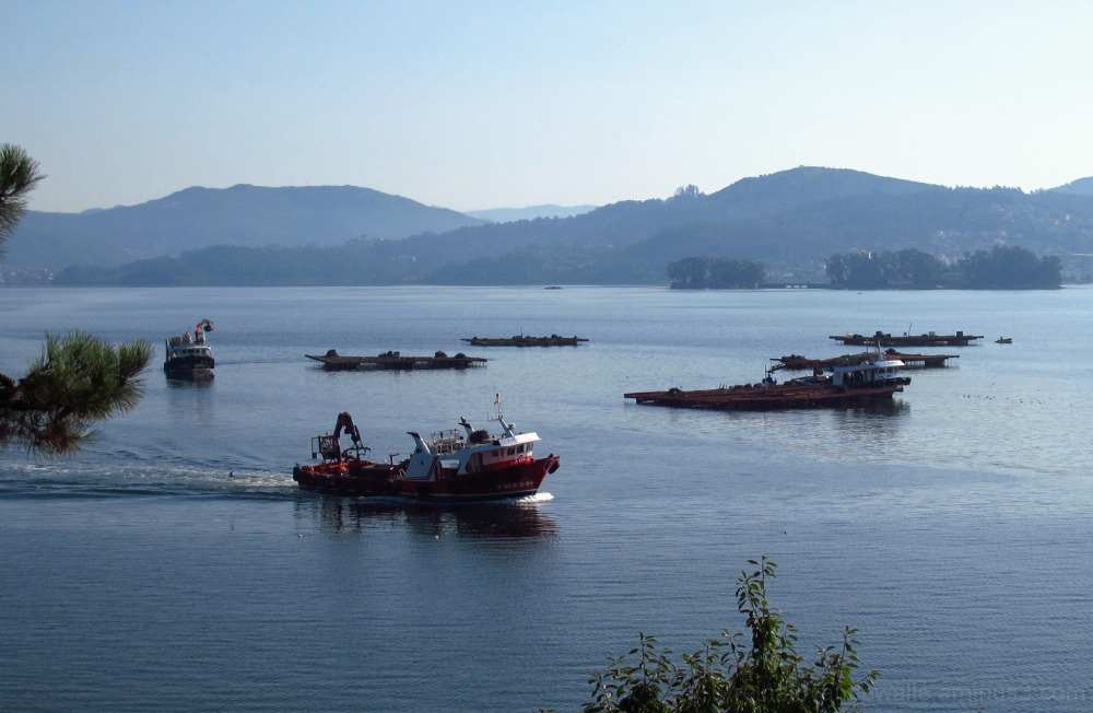 Mussel boats