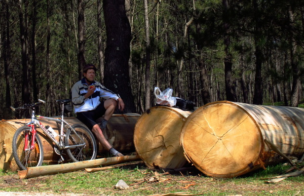 Cut eucalyptus