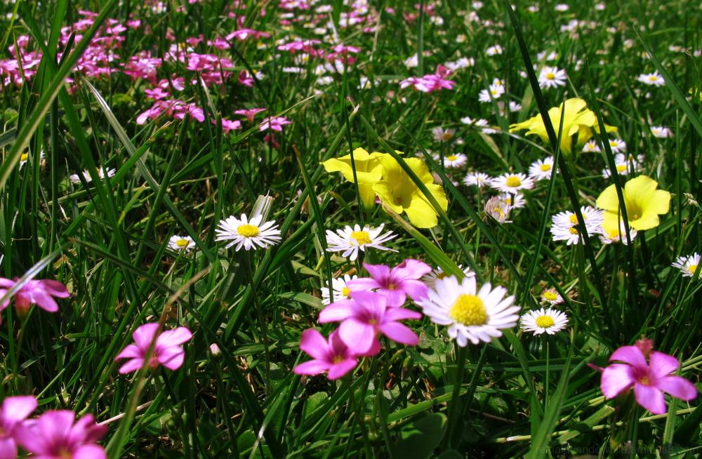 Flowers of different varieties