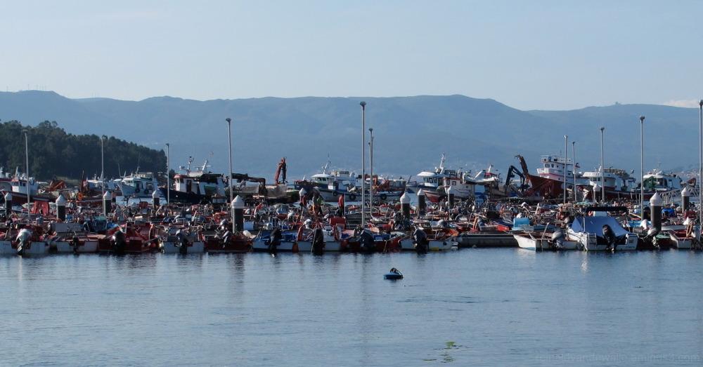 A lot of fishing boats