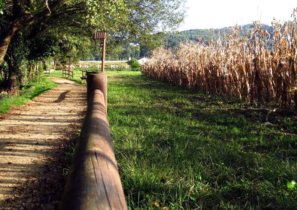 Corn plantations thrughout the promenade.