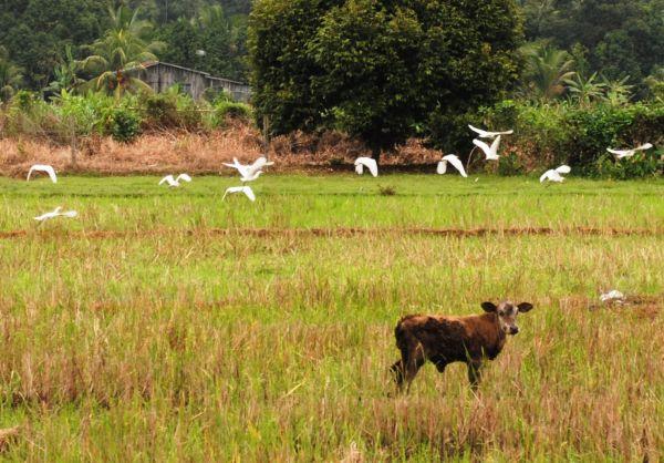 Rural Malaysian Scene
