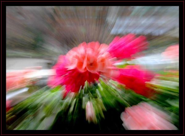 Coup de zoom dans un parterre de fleurs