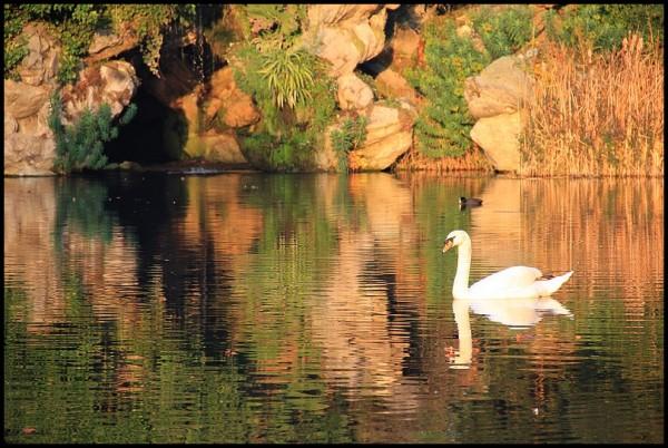 Le cygne du lac  2