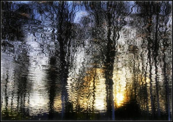 Les reflets de la vie