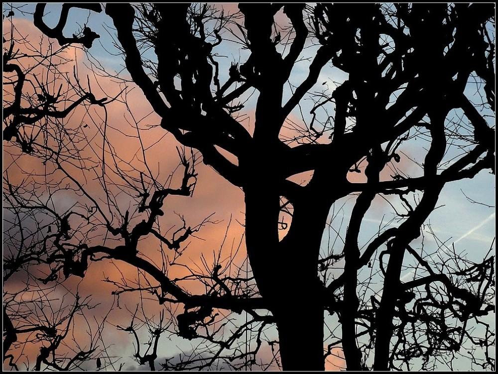 Arborescences
