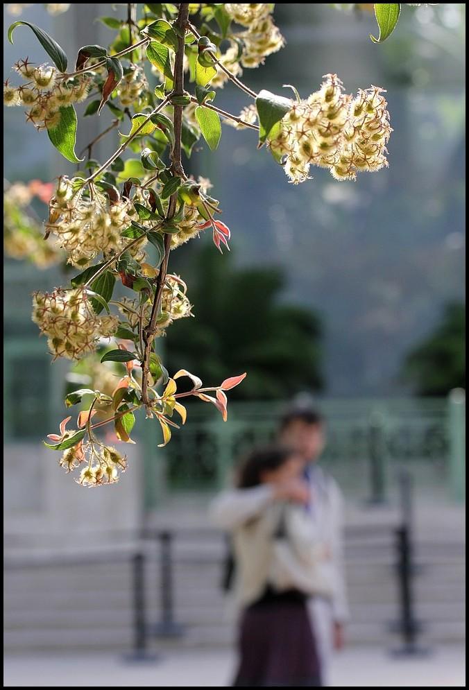 A l'ombre du kolkwitzia amabilis...