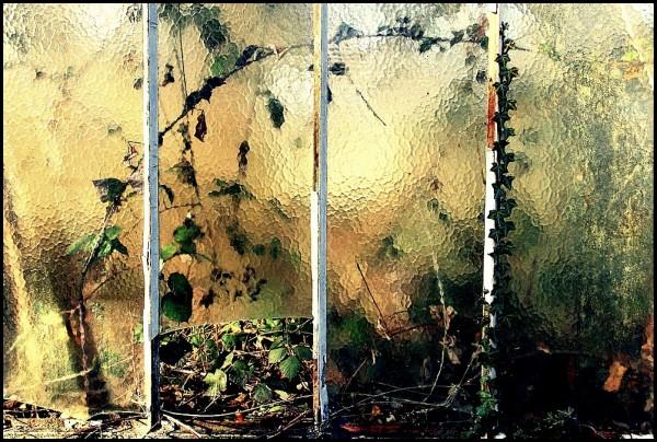 Friche urbaine
