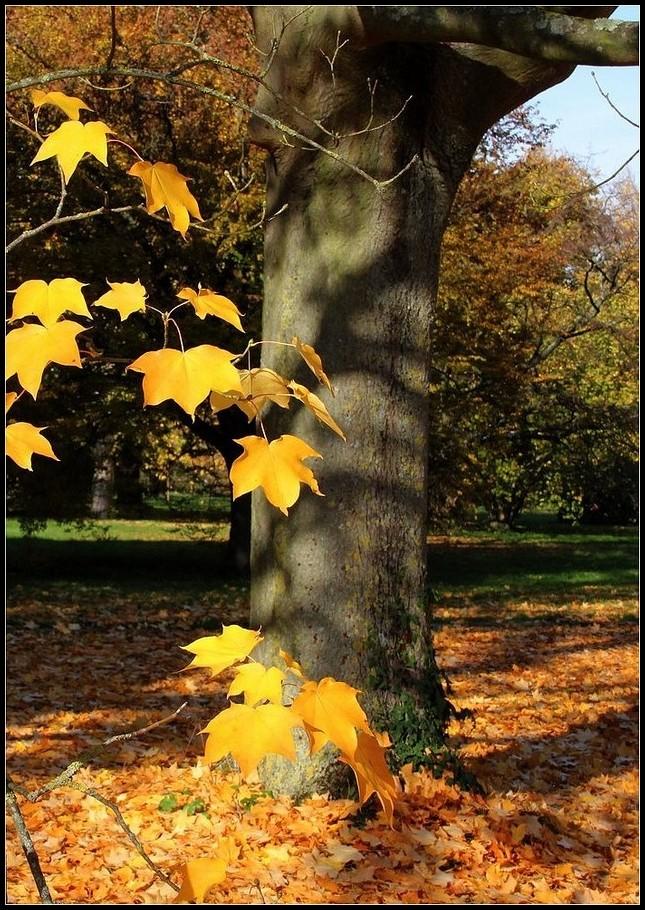 arbres  feuilles automne