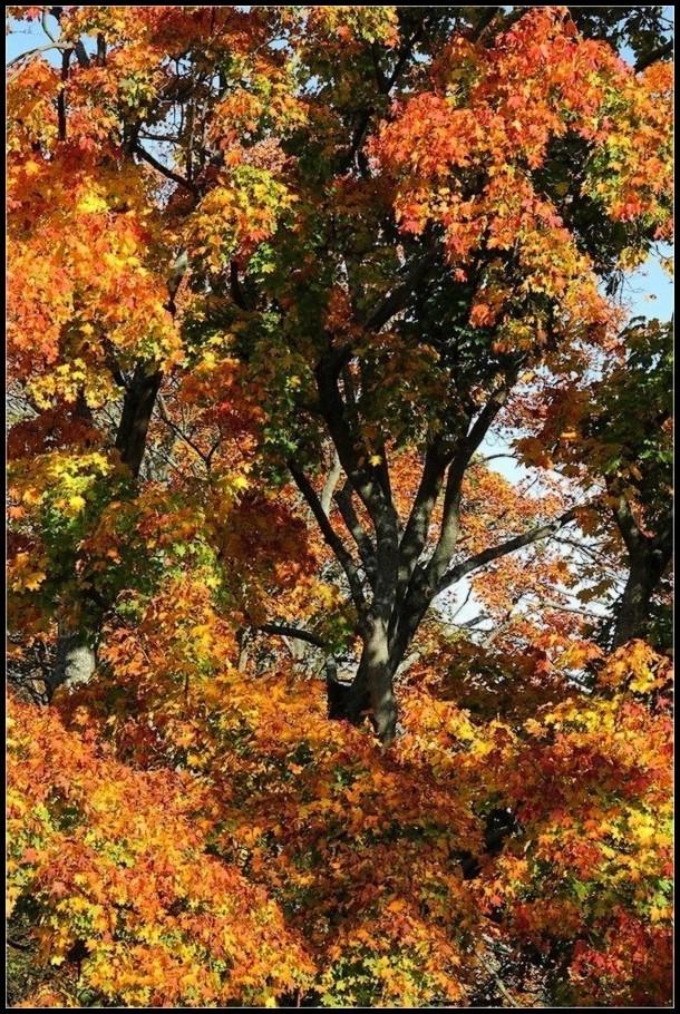 Parure d'automne - 3