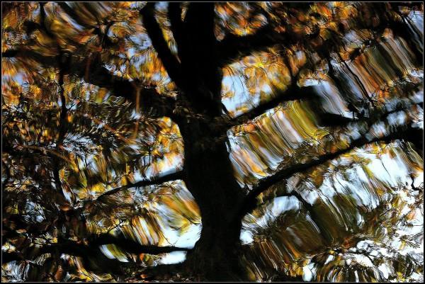 Reflets de l'automne