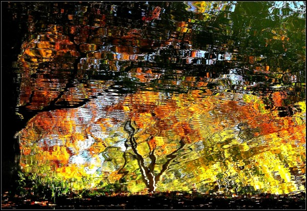 Reflets de l'automne ~ 1