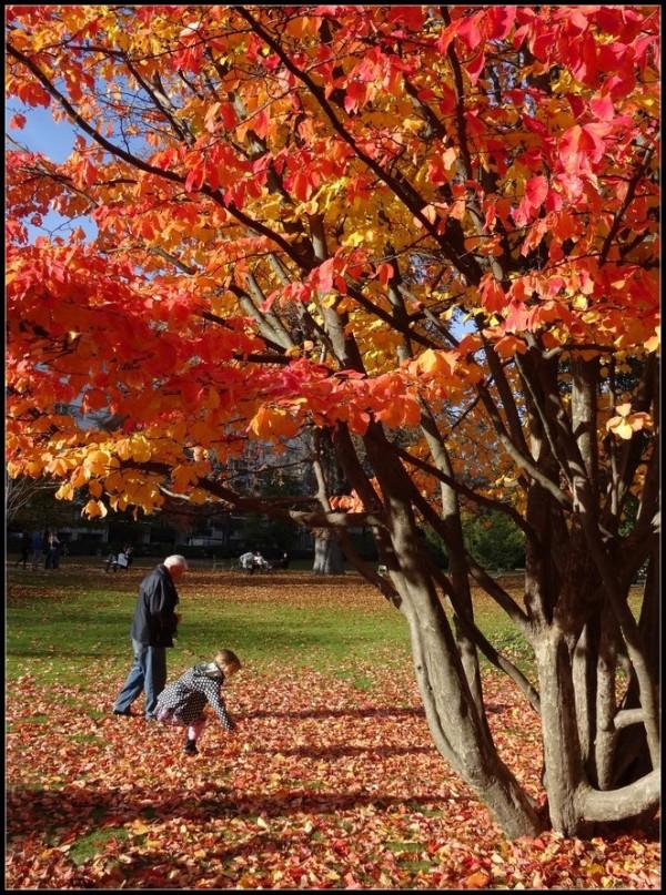 C'était pourtant un bel automne ...