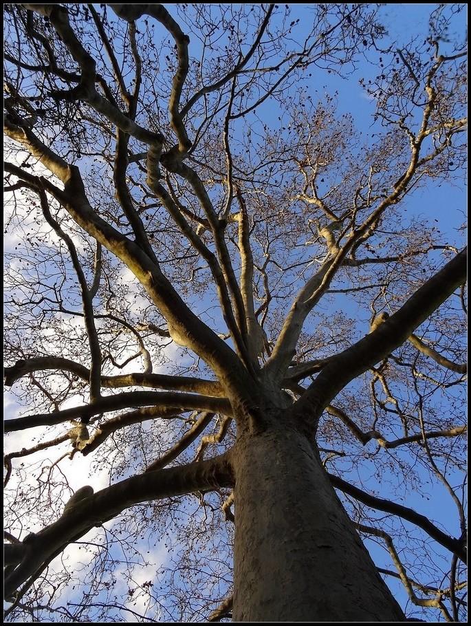 Les racines du ciel