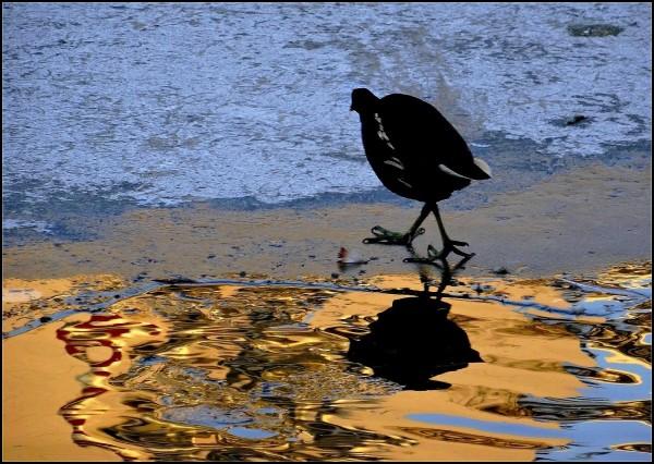 La poule aux eaux d'or