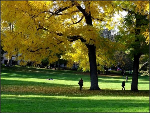 Scènes d'automne au parc -1