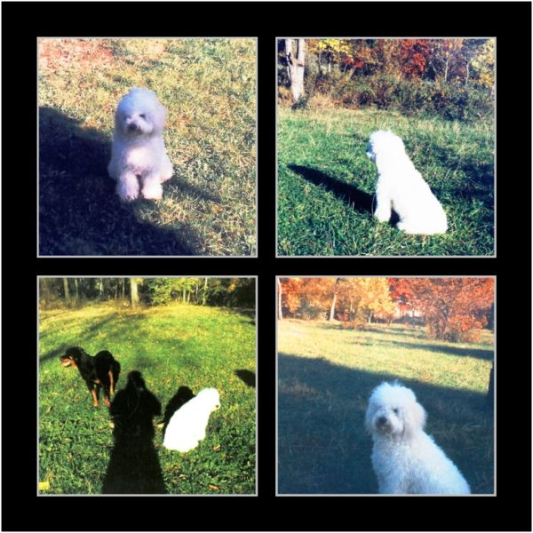 1995 10 11 Lucky in Baisoara Park