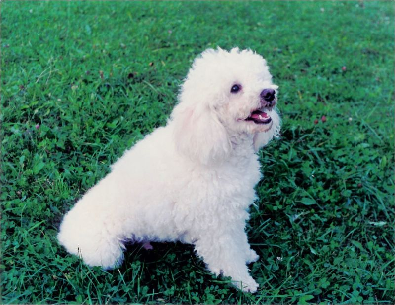 1997 09 02 Lucky in Baisoara Park