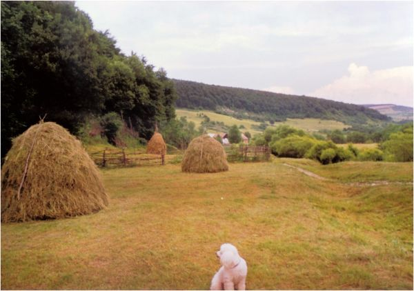 1999 06 17 Lucky and haystacks