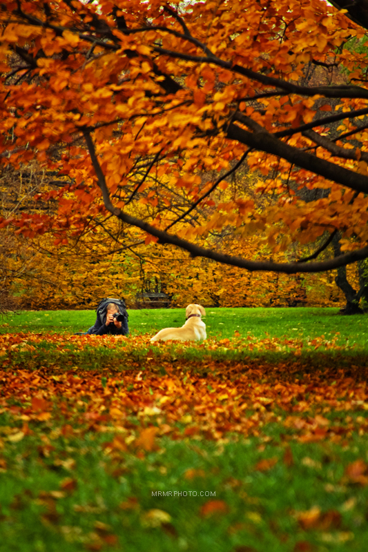 Photography in Autumn