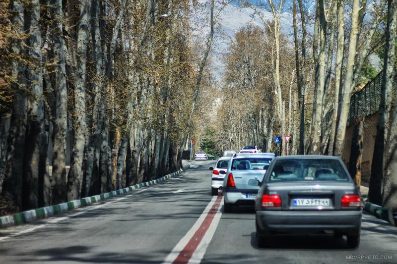 Trees in Tehran