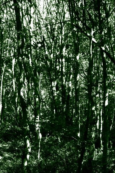 درخت 1