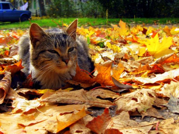 Autumn Cat