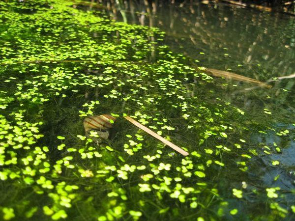Underwater Snail