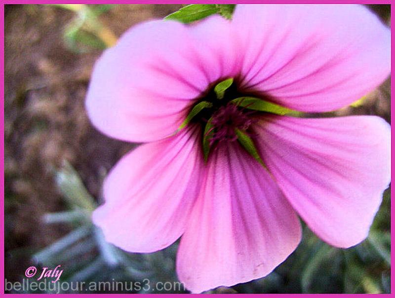 douceur d'une fleur mauve très pâle