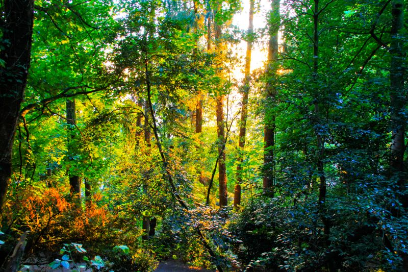 Colourful Forest
