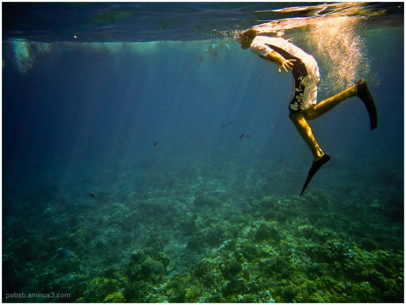 Hawaii : Snorkelling