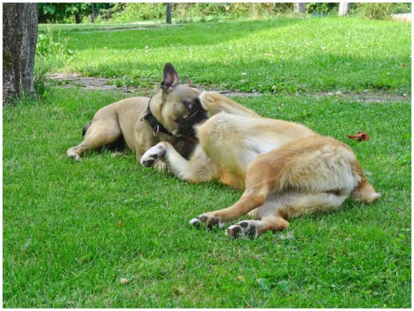 Gaia & Cato 5