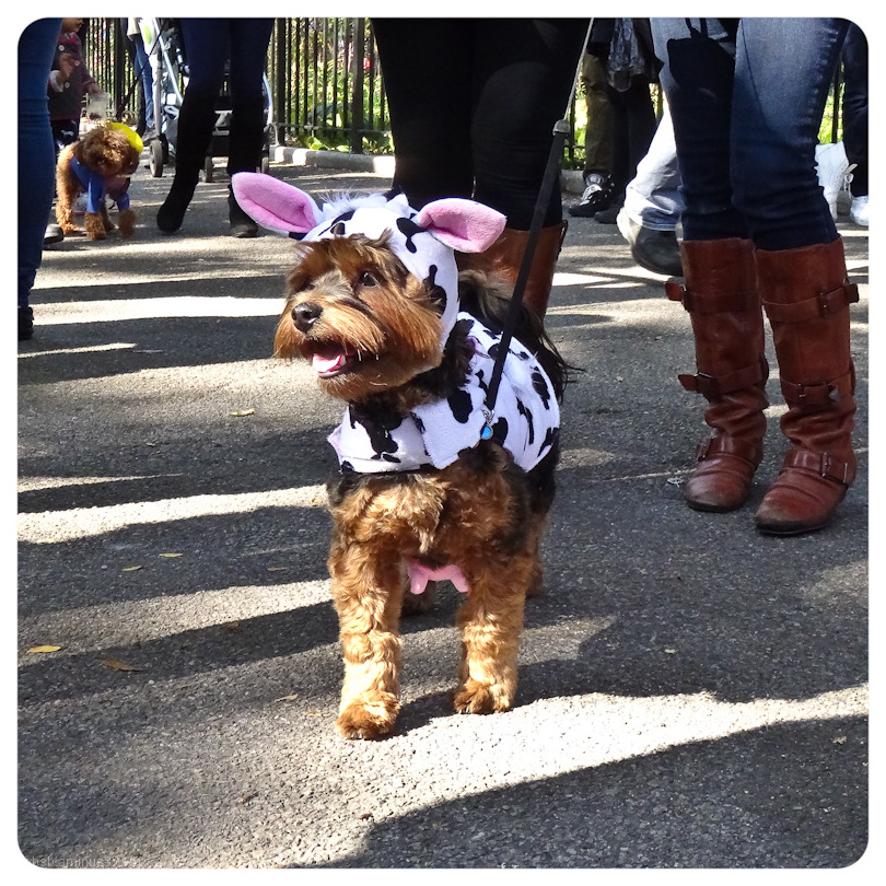 Howl-o-ween in New York 1