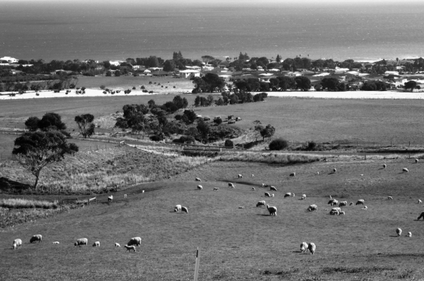 Sheeps near the sea/Ardiak eta itsasoa