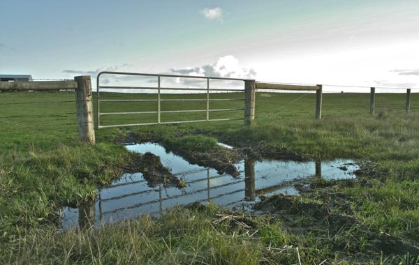 The pond and the door/ Putzua eta atea